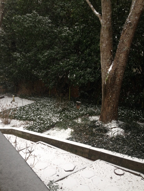Our backyard getting a blanket - and I got to hear the tinkle of snow falling.  I LOVE that sound